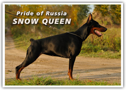 Pride of Russia SNOW QUEEN